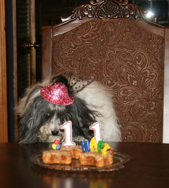 I'm 11 years old! Hapi Birthday to me!!