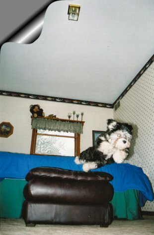 I'm flying high, SUPER DOG --